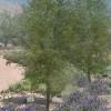 Bosque de Bernalillo Water Quality Project
